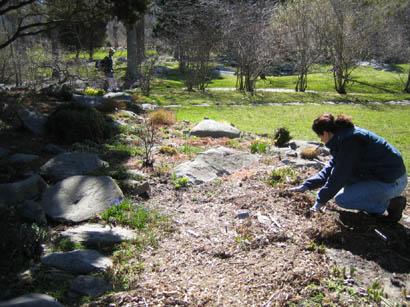 rock garden after the storm