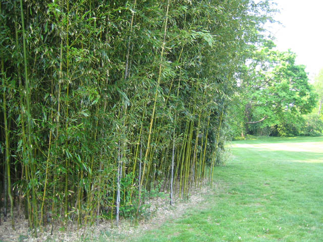 the bamboo grove holds a secret…
