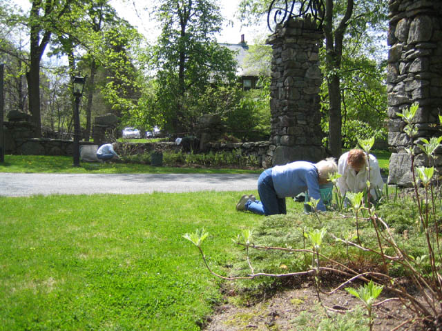 Volunteers cleaning the dead out and weeding the Entrance Gate bed