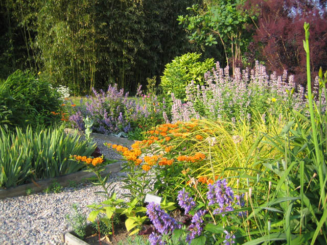 Asclepias combos in the Idea Beds