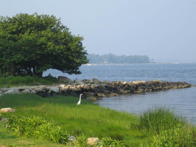 muggy morning egret sighting
