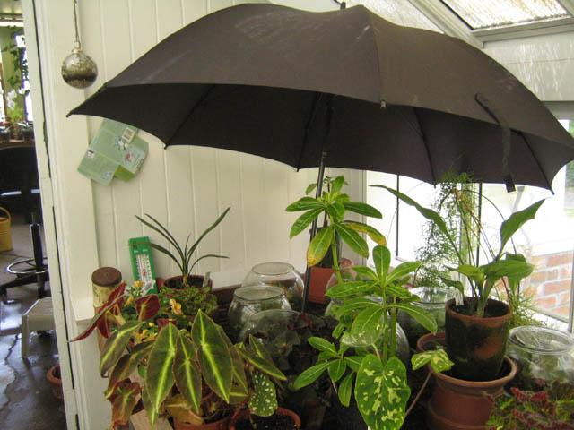 Julie's parasol