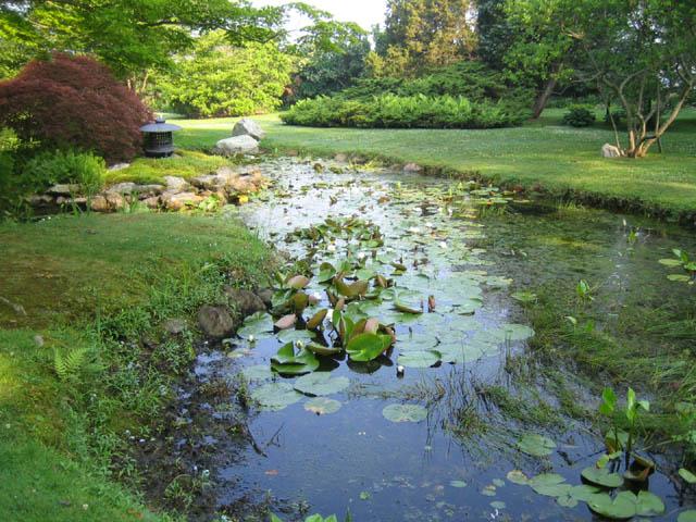 The pond 6-27-07
