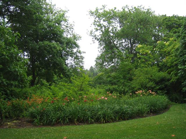 Daylilies 7-5-07