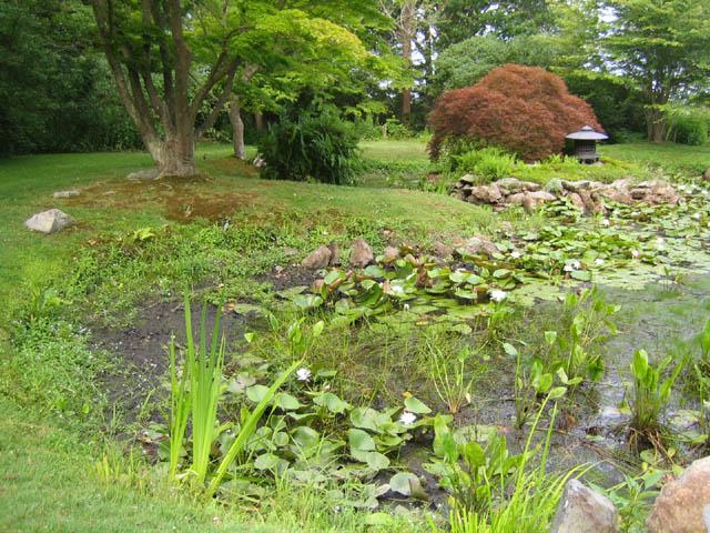 The pond 7-16-07