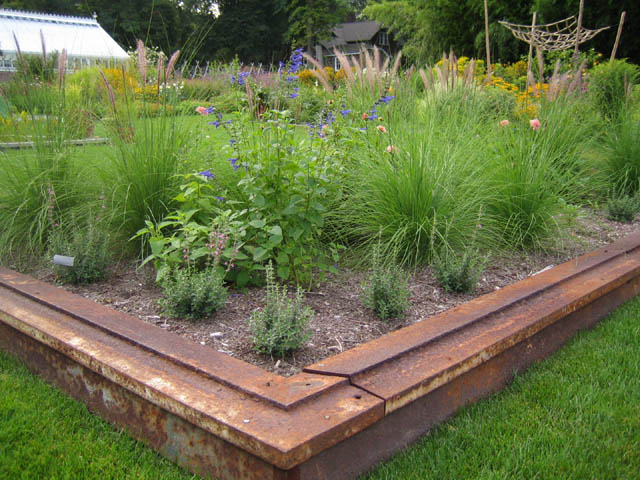 recycled iron bed with dahlias, Salvia guaranitica, Pennisetum ruppelianum and Teucrium chamaedrys (wall germander)