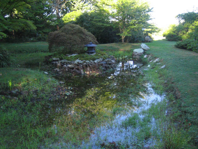 The pond after the rain