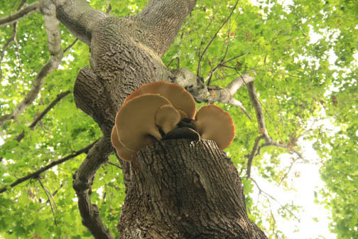 mushrooms do grow on trees