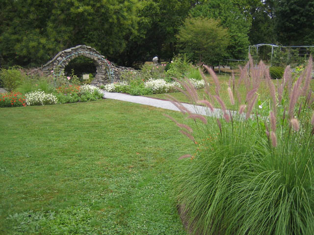 Fountain grass in the Rose Garden