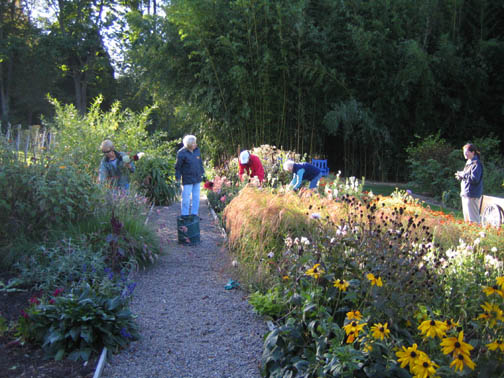 The Deadheads picking the last of the Cutting Bed flowers