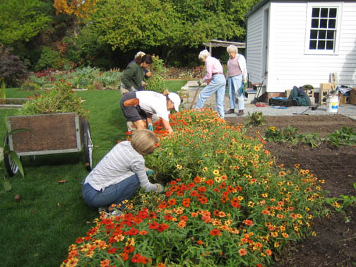 Deadheads taking out the zinnias