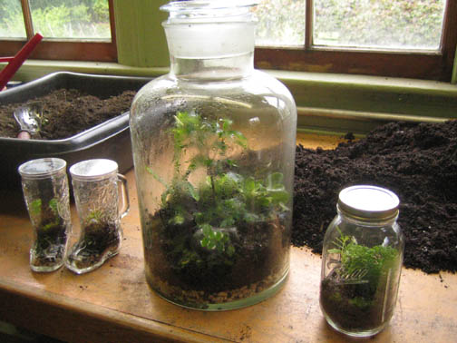 a growing collection of terrariums