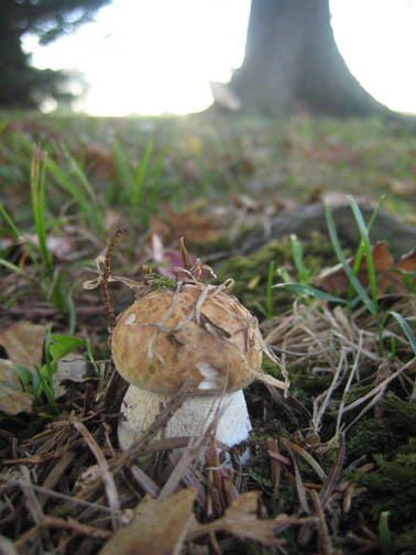 lonely toad stool
