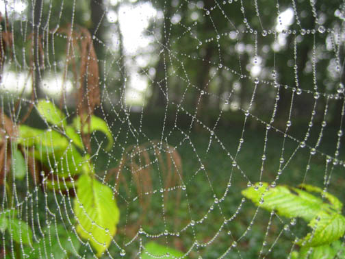 world wide spiderweb