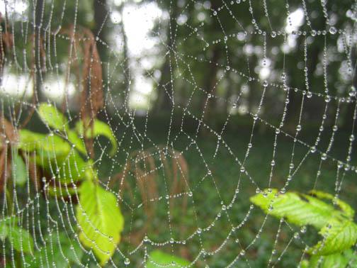world wide spiderweb