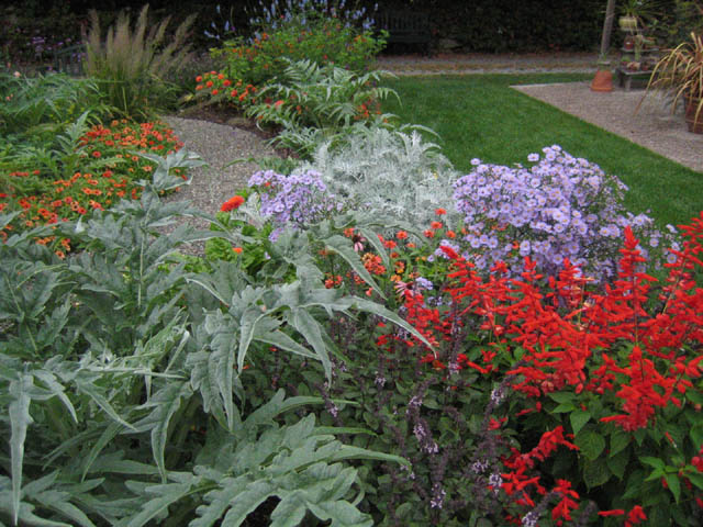 Cardoon combos in mid-September