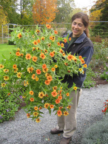 Gail and a full grown zinnia - that's ONE plant!