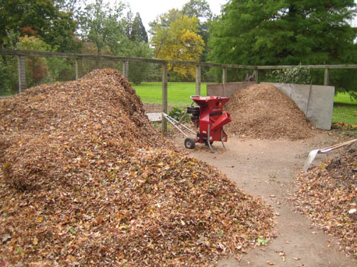 a leaf mountain to shred into a molehill