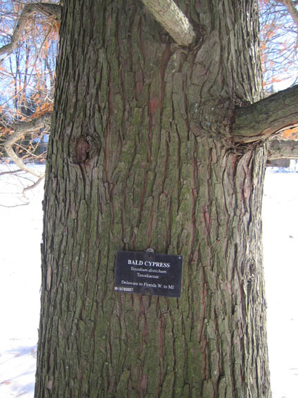 There's all sorts of info on the tree labels!