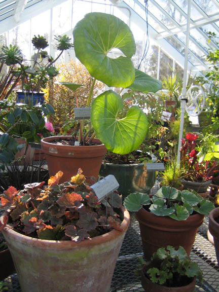 plants in the greenhouse - labeled and unlabeled…