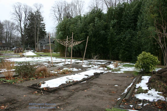 Melting snow reveals the start of the Display Garden redesign project - phase 2