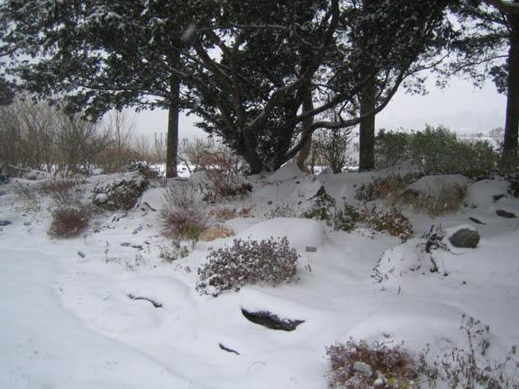 The Rock Garden under a blanket