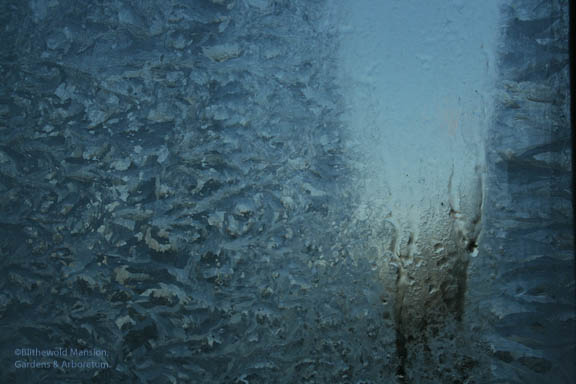 ice painting on the potting shed window