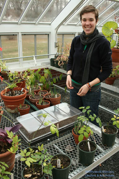 Lila and her Arabidopsis - into the cold house for germination