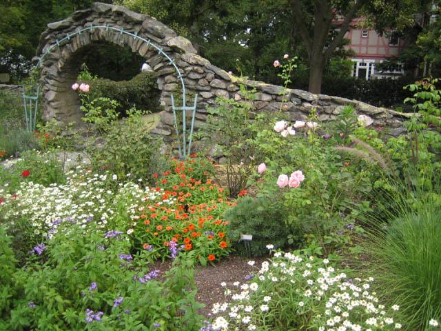 Mid August Rose Garden