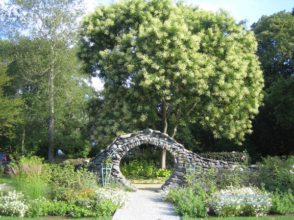 The Sophora, the Moongate and Rose Garden in August