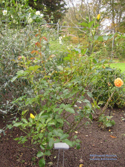 'Morning Has Broken' in November after the garden clean-up - this picture doesn't do it justice