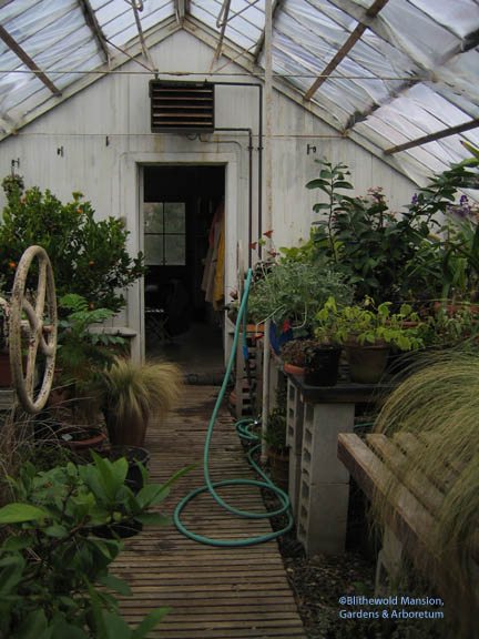 the greenhouse - before restoration.