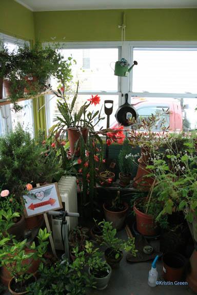 my greenhouse/vestibule