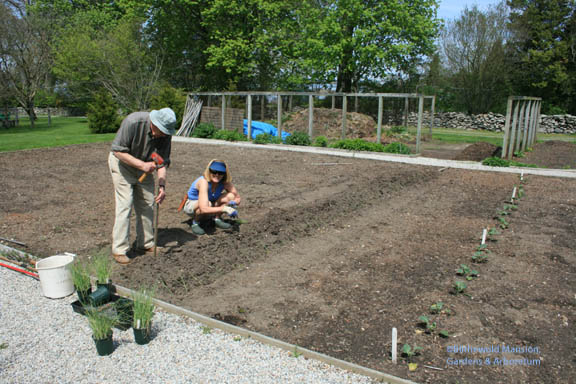 Dick and Cathy - the vegetable garden dynamic duo planting leeks