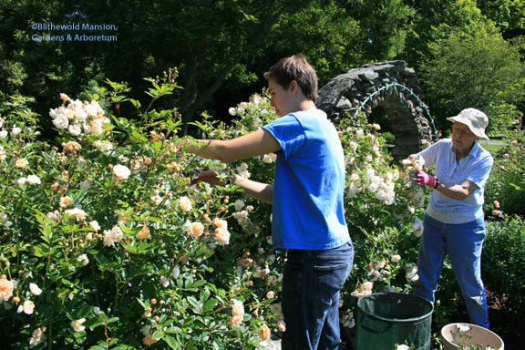Lilah and Ellie working on the tedious monster roses