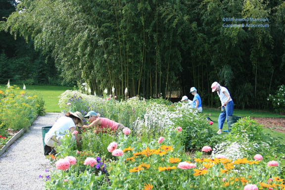 The Deadheads weeding the Cutting Garden