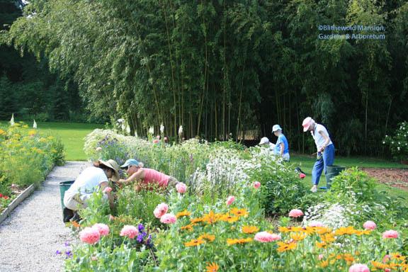 The Deadheads weeding the Cutting Garden