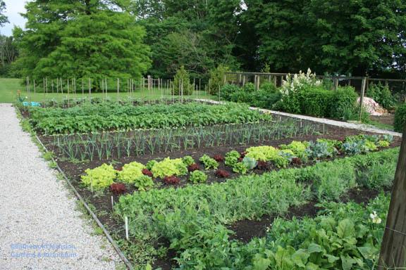 Dick's garden