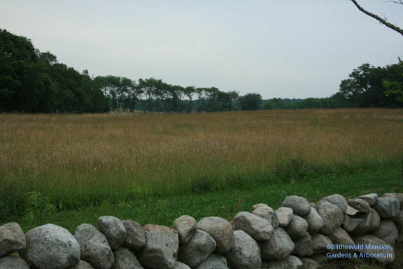 and another meadow view avec stone wall
