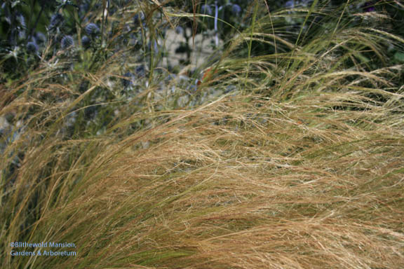 spun gold or Stipa?