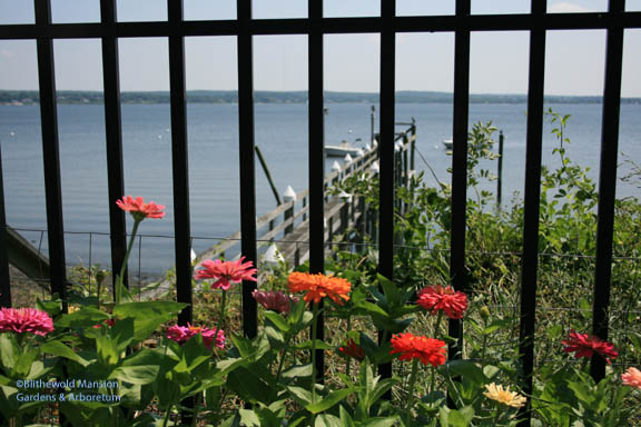 Nick's view of the river through the zinnias