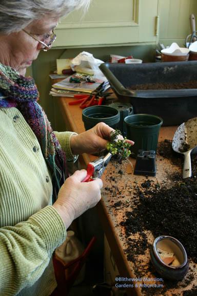 teaching bonsai in the potting shed