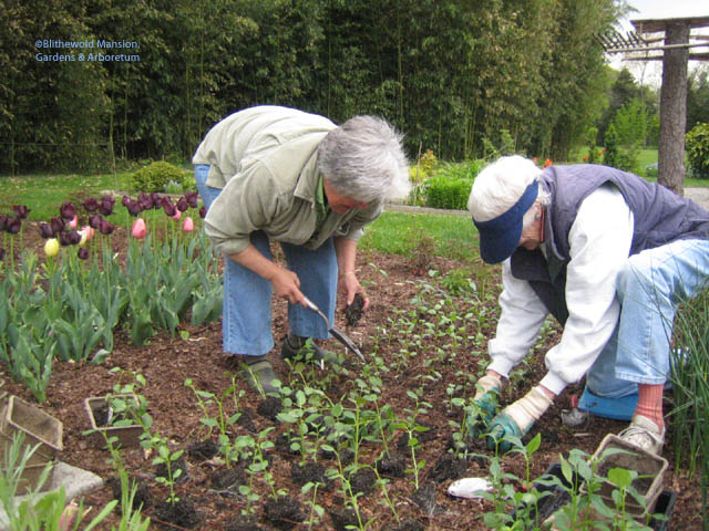 Julie and Ann - who has been a garden volunteer since Julie's earliest days here - in the Cutting Garden