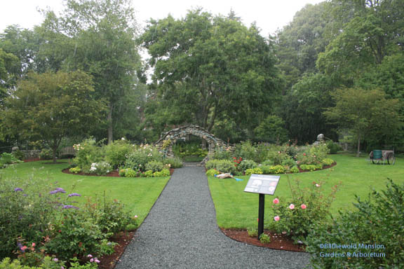 Rainy Rose Garden Monday (I miss Lilah!)