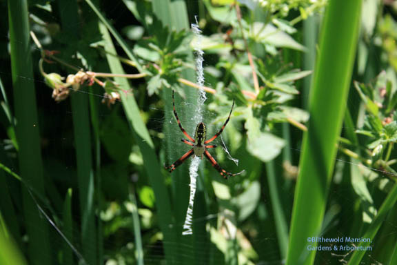 Orb-web spider in thigh high stilettos