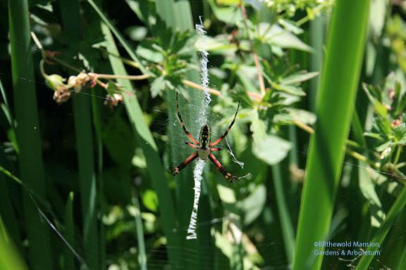 Orb-web spider in thigh high stilettos