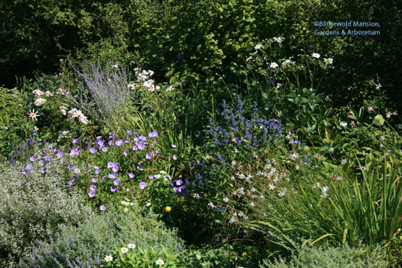 North Garden mix of hardy and tender perennials and annuals