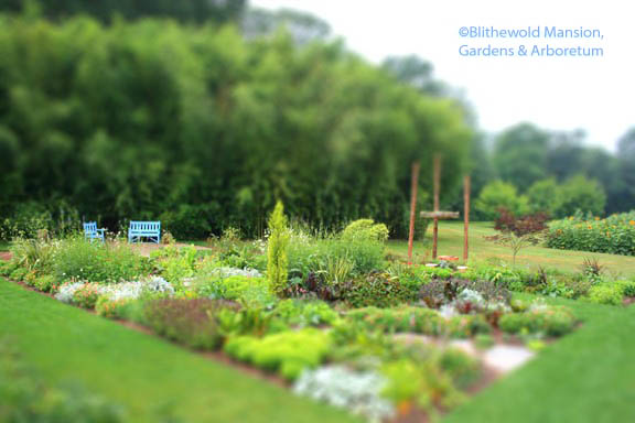 July tiltshift in the Display Garden