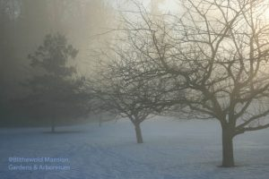 Crabapples in the spot light - February