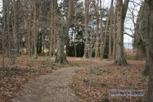 pockets of daffodils in the Bosquet